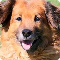 Adopt A Pet :: MISS RUE(A TRUE LADY-SO GENTLE - Wakefield, RI