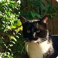 Adopt A Pet :: Buddy - Union, SC