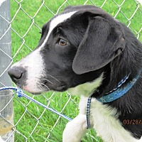 Adopt A Pet :: Patches - Germantown, MD