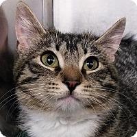 Adopt A Pet :: Tango - New York, NY