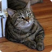 Adopt A Pet :: Jabba - Gaithersburg, MD