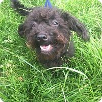 Adopt A Pet :: Anna-Lee - Vacaville, CA