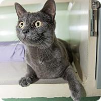 Adopt A Pet :: Jaden - New York, NY