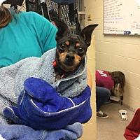 Adopt A Pet :: Vivian - Janesville, WI