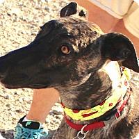 Adopt A Pet :: Mack - Tucson, AZ