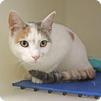 Adopt A Pet :: Precious - Harrisonburg, VA