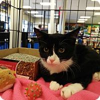 Adopt A Pet :: Berney - Avon, OH