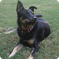 Adopt A Pet :: Brody - Holly Springs, NC