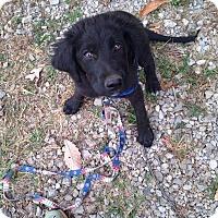 Adopt A Pet :: Benjamin - Huntsville, TN
