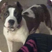 Adopt A Pet :: Smurf - Madison, AL