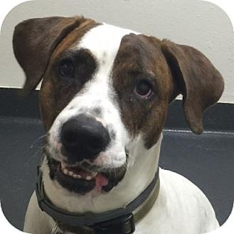 Hound (Unknown Type) Mix Dog for adoption in Ithaca, New York - Gus Gus