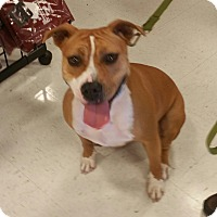 Adopt A Pet :: Heidi - Houston, TX