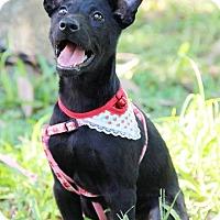 Adopt A Pet :: Cleo - Castro Valley, CA