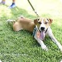 Adopt A Pet :: dexter 8418 - Columbus, GA