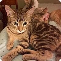 Adopt A Pet :: Boo Boo - Oakdale, CA