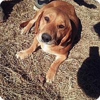 Adopt A Pet :: Bernice~ meet me! - Glastonbury, CT