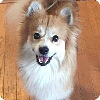 Adopt A Pet :: Huey - Dayton, OH