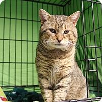 Adopt A Pet :: Gus - Warwick, RI