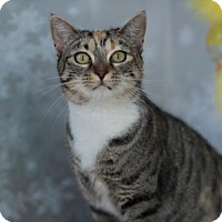 Adopt A Pet :: Ingrid - Erwin, TN