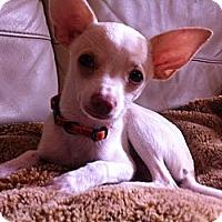Adopt A Pet :: Sonny - Vaudreuil-Dorion, QC