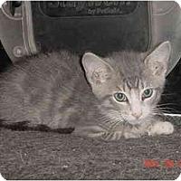 Adopt A Pet :: Amos - Inverness, FL