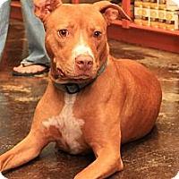 Adopt A Pet :: Lulu - Rowlett, TX