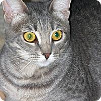 Adopt A Pet :: Heather - Laguna Woods, CA