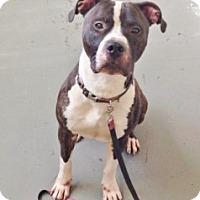 Adopt A Pet :: Stan - Medford, MA