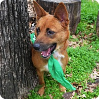 Adopt A Pet :: Sarah - Burleson, TX