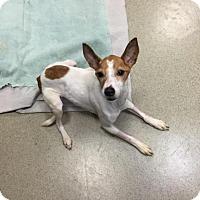 Adopt A Pet :: GUEST DOG - Faye Bell - Decatur, GA