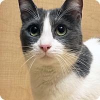 Adopt A Pet :: Peter - Irvine, CA