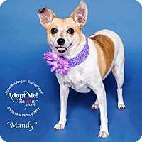 Adopt A Pet :: Mandy - Houston, TX