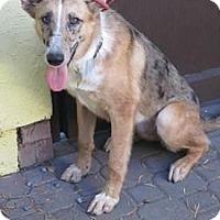 Adopt A Pet :: Bean - San Diego, CA