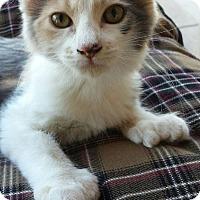 Adopt A Pet :: Mitzie - Chandler, AZ