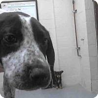 Adopt A Pet :: A253711 - Conroe, TX