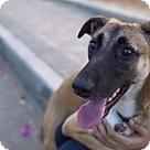 Adopt A Pet :: _Xena