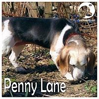 Adopt A Pet :: Penny Lane - Novi, MI