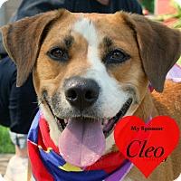 Adopt A Pet :: Harvey - San Leon, TX