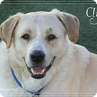 Adopt A Pet :: Clyde - Rockwall, TX