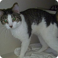 Adopt A Pet :: Simon - Hamburg, NY