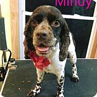 Adopt A Pet :: Mindy - Garden City, MI