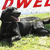 Adopt A Pet :: Dan - Grayson, LA