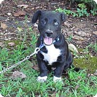 Adopt A Pet :: BOGAN - Hartford, CT