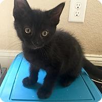 Adopt A Pet :: Verragio - Hampton, VA