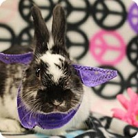 Adopt A Pet :: Friskers - Voorhees, NJ