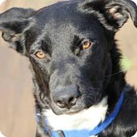 Adopt A Pet :: Lili - Avon, NY