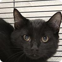 Adopt A Pet :: Phoenix - Sarasota, FL