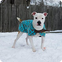 Adopt A Pet :: Derby ~ Happy Go Lucky! - Caldwell, NJ