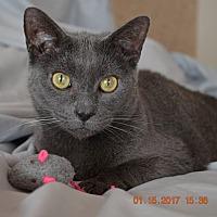 Adopt A Pet :: Sheba & Rafaela - Horsham, PA