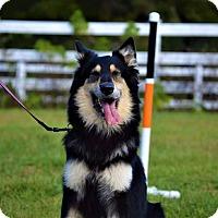 Adopt A Pet :: Balthazar - Clearwater, FL